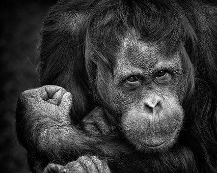 Tiergarten Tierlobby Tb 85 Prügelattacken Zirkus Belly In